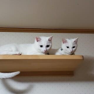 スレンダーボディの美猫ペア