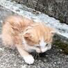 保護した子ネコの里親を募集致します。
