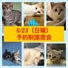 【5/23譲渡会】5姉妹 すごく美猫です サムネイル5
