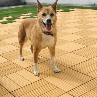 ミキちゃん柴犬です(^^)