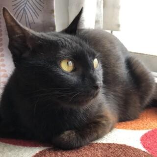 【テンコウ】天真爛漫甘えっ子のサビ入り黒猫女子