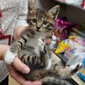 手袋靴下エプロン柄!可愛い子猫 明日香ちゃん