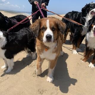 大型犬♀・40キロ