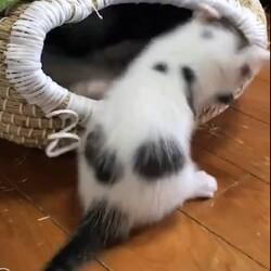おきなわ美ら仔猫❤譲渡会 in 緑区 サムネイル3
