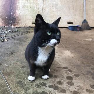 靴下猫ちゃん。とても大人しく穏やかな性格です。