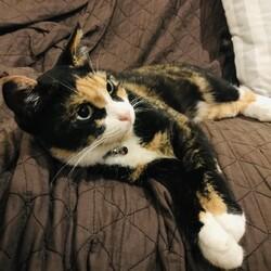猫のむらさきさんが教えてくれたこと。