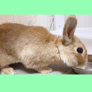 好奇心旺盛なウサギ『トトロくん』