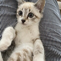 【5/23譲渡会】とっても美猫さん