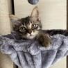 丸顔の美人猫さん