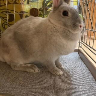 優しい性格のウサギ『さつきちゃん』
