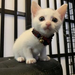 白猫兄妹☆にな