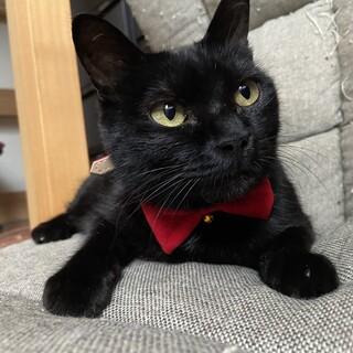 人馴れしている可愛い黒猫ちゃん