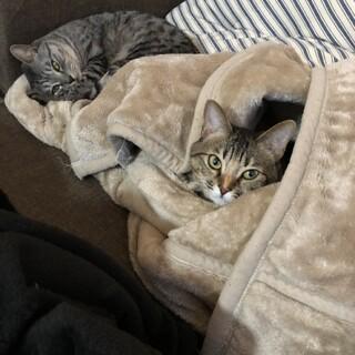 甘えん坊の姉妹猫です!