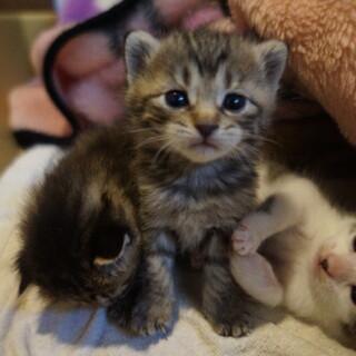 かわいすぎる子猫ちゃんたち!