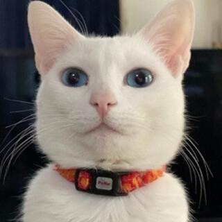 ブルーの瞳のお姫様、ルーちゃん♪