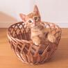 【募集停止中】活発で人と猫が大好きなチェシャくん