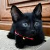 募集停止❤️黒猫女子らん