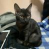 黒猫に近い、濃いキジトラの女の子です。