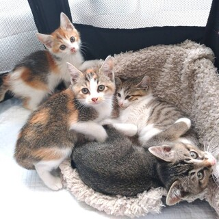 典型的な三毛らしい三毛★美猫姉妹ペアで