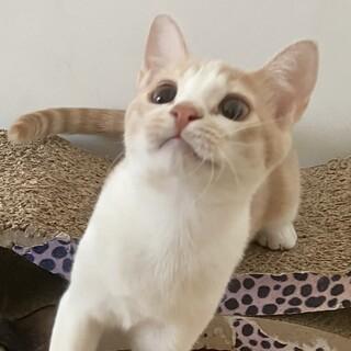 【5/30芝浦】猫付き合いは上手なくるくる