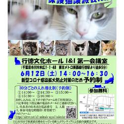 【千葉県市川市】イコール保護猫譲渡会vol.8 サムネイル1