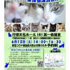 【千葉県市川市】イコール保護猫譲渡会vol.8