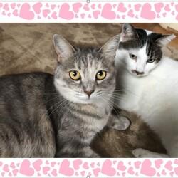 稲ねこ 保護猫譲渡会 開催です! サムネイル2