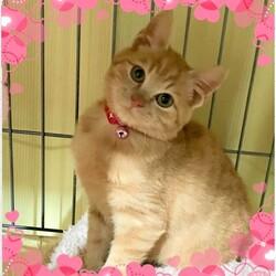 稲ねこ 保護猫譲渡会 開催です! サムネイル3