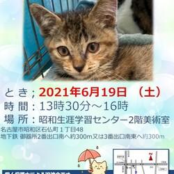 保護猫の譲渡会 サムネイル1