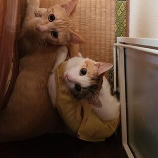 イケニャン茶トラちゃん♂美女猫ミケちゃん♀️