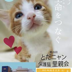 第26回 とだニャン保護猫里親会 サムネイル1