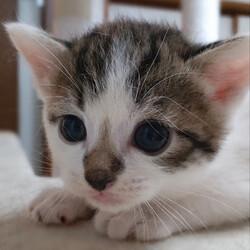 第26回 とだニャン保護猫里親会 サムネイル2