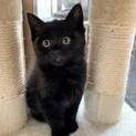 人が大好きなおっとり黒猫★げんたくん
