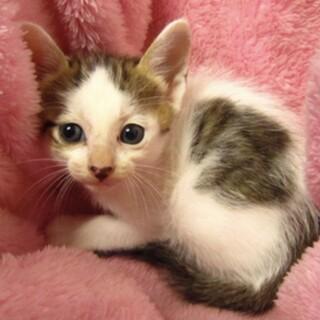 里親様に迎えられました。子猫♀