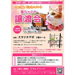 6/5 千葉ねこ里親会にゃんハート 保護猫の譲渡会