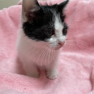 交渉中です。屋根から助けられた子猫ルーフ君