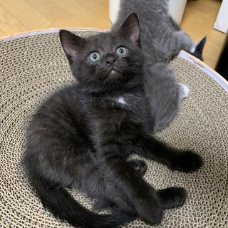 可愛い黒猫ちゃん❤️