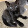 可愛い黒猫ちゃん❤️ サムネイル2