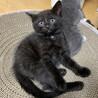 可愛い黒猫ちゃん❤️ サムネイル5
