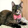 グリーン瞳!美サビ猫!抱っこ好き!