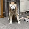 癒しのこころさん•柴犬MIX サムネイル4
