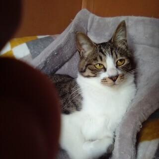 多頭飼育放棄の成猫さん達の里親さん、募集デス✨
