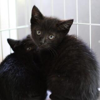 美形黒猫兄妹 自己主張強め福島くん