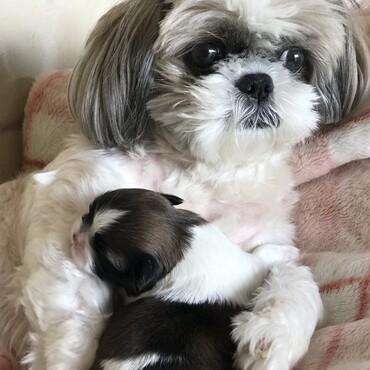 ぷりんに赤ちゃん産まれました!名前はふくちゃんです!
