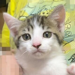 【6/6東日本橋】4月10日生まれ♡ バンブーくん