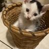 段ボール遺棄子猫兄弟 サムネイル4