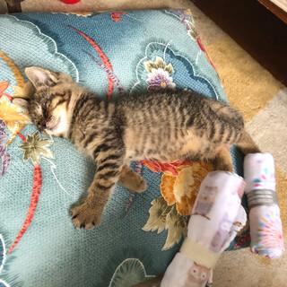 ヘソ天の可愛い子猫