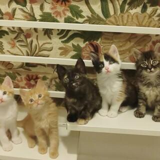 長毛美猫5兄妹と賢いママ(ママとペア優先)