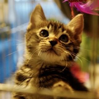初心者歓迎★甘えん坊な美猫兄弟たち