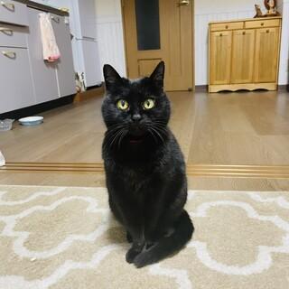 まったりな黒猫ゆずちゃん!